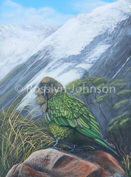 Cheeky Kea SOLD